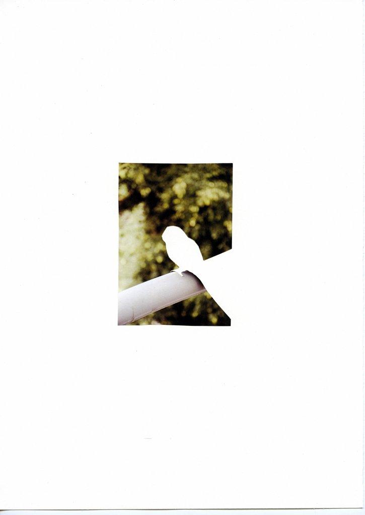 negative-bird-nov-12-3.jpg